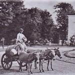 Sacagiii vechiului Bucureşti